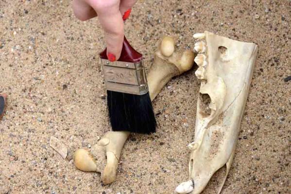 Das Forschen im GrabungsCamp kann zuweilen ein Knochenjob sein. Foto: LWL/Quickels